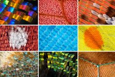 Impressive Macro Photographs of Butterfly and Moth Wings by Linden Gledhill