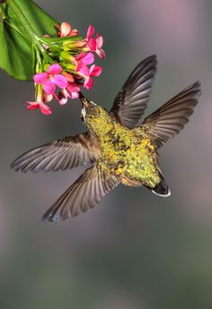 Dan Tracy captured these hummingbirds for the Audubon 2012 Photo Awards - what a cool perspective!