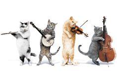 Les chats musiciens