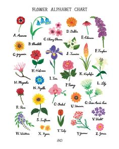 Its so cute to have a flower alphabet.More types of flowers💃💃yeey Flowers Names And Pictures, Flowers Name List, Flower Names, Flower Images With Name, Flowers Pics, Wild Flowers, Flower Chart, Fleur Design, Flower Alphabet