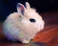 A really cute bunny