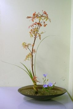 Ikebana, so lovely. Ikebana Flower Arrangement, Ikebana Arrangements, Floral Arrangements, Bonsai, Japan Flower, Most Beautiful Flowers, Exotic Flowers, Purple Flowers, Ancient Japanese Art