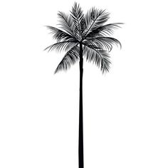Palm Tree Print, Palm Leaves Print, Palm Tree Art, Palm Tree Wall Art,... ❤ liked on Polyvore featuring home, home decor, wall art, printable palm tree, black white wall art, black and white home accessories, black and white wall art and black white home decor