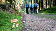 Der insgesamt 230 Kilometer lange Weitwanderweg entlang der Lainsitz im Waldviertel führt uns auf Etappe 2 von Weitra nach Gmünd. Wandern entlang von saftig grünen Wäldern und Wiesen... Travel, Hiking, Forests, Viajes, Trips, Traveling, Tourism, Vacations