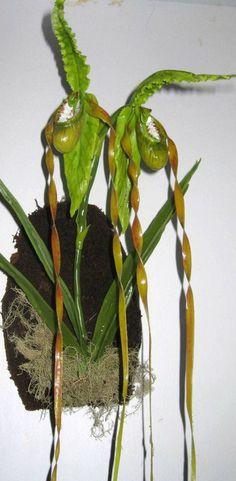 replica de orquidea en porcelana fria