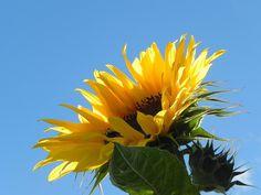 Ode to the Sun by JocelyneR on DeviantArt