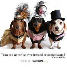 You can never be overdressed or overeducated #OscarWilde #Quote #quoteoftheday #Fashion #Dogs #Pets #education #style #moda #estilo #FrancescaMiranda - @Francesca Miranda- #webstagram