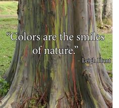 COLORS ARE THE SMILES OF NATURE AND COLORS SURE MAKE ME SMILE....NATURE TOO