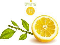 Fresh cut lemon design vector 01 - Vector Food free download
