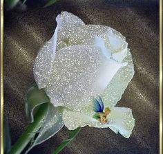 TABLAS y MARCOS PARA POEMAS: Imágenes de rosas blancas para poemas