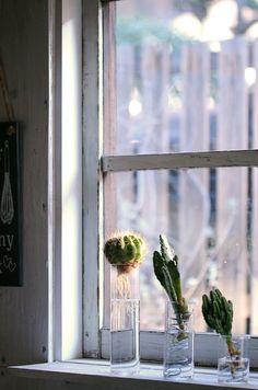 ワイヤーと空き瓶でDIY 多肉植物やサボテンの水栽培を楽もう