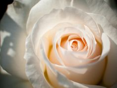 ☆.。.:*・°☆.。.:*・°☆. ・°☆:*・°☆A heavenly rose for my Mom, xox ☆.。.:*・°☆.。.:*・°☆.。.:*・°☆.。.:*・°☆