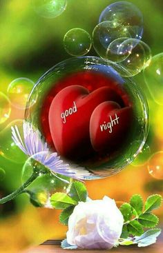 We send good night images to our friends before sleeping at night. If you are also searching for Good Night Images and Good Night Quotes. Good Night Sister, Good Night I Love You, Romantic Good Night, Good Night Love Images, Good Night Blessings, Good Morning Prayer, Good Night Sweet Dreams, Good Night Image, Good Morning Good Night