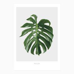 Impressions manuelles, Monstera print - 50x70 est une création orginale de lemonducky sur DaWanda