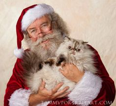 BEAUTIFUL RETIRED ADULT SHOW HIMALAYANS TO BEAUTIFUL HOMES $FREE