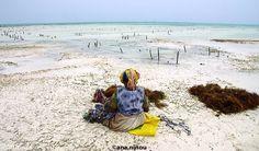 algas, seaweed , algues, áfrica , sea, ocean, mar Kanken Backpack, Backpacks, Bags, Travel Photography, Backpacking, Fotografia, Handbags, Backpack, Backpacker