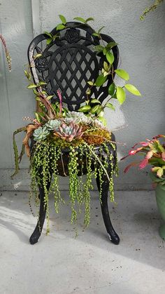 Succulent Chair by Mario Reyes More