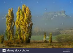 Download this stock image: Hazy view of mountains with sunlit Poplar trees in the foreground Fouriesburg South Africa - ACT65Y from Alamy's library of millions of high resolution stock photos, illustrations and vectors.