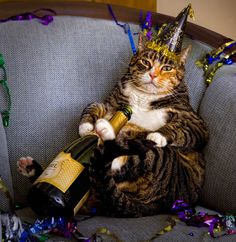 happy new years cat for more new years cats visit httpswww