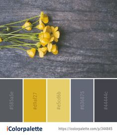 Color Palette Ideas from Yellow Flora Flower Image - Gelb Color Palette For Home, Color Schemes Colour Palettes, Grey Palette, Paint Color Schemes, Colour Pallette, Yellow Color Schemes, Grey Living Room Ideas Colour Palettes, Kitchen Color Schemes, Yellow Color Combinations