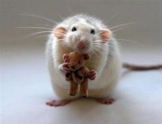 ownt: Ratinhos e o seu fascínio por ursos de pelúcia !