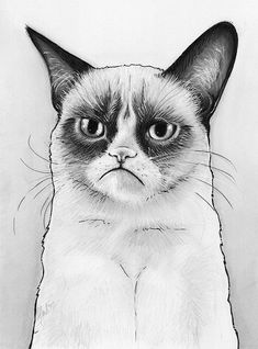 grumpy cat coloring pages | Grumpy Cat Coloring Page Grumpy cat portrait drawing