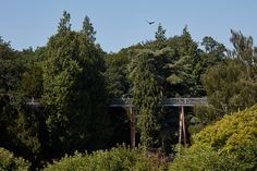 https://glennhowells.co.uk/project/stihl-treetop-walkway-at-westonbirt/