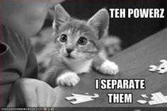 #cats #conlaw