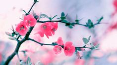 Floral 1080p Background…