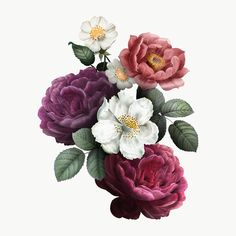 free png of Beautiful hand drawn colorful roses transparent png, Beautiful hand drawn colorful roses Flowers Roses Bouquet, Hand Flowers, Bunch Of Flowers, Botanical Flowers, Pink Roses, Flower Background Wallpaper, Flower Backgrounds, Beautiful Hands, Beautiful Flowers