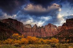 Zion at Autumn - Zion National Park in Utah with the cottonwoods a golden color.  Prints from $27.  Canvas wraps and framed prints also available.