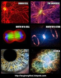 Brain cell, the universe, birth of a cell, death of a star, eye and nebula. #science #cosmos #physics
