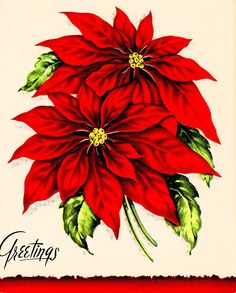 christmas poinsettia clip art large clip art holiday scrapbook rh pinterest com Christmas Border Clip Art Christmas Ornament Clip Art