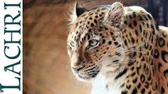 Speed drawing leopard in colored pencil art tutorials drawing - YouTube
