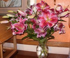 Fresh-cut Stargazer Lilies  from the garden