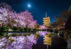Toji Kyoto photo by @Kagaya