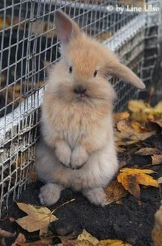 ♥ Small Pets ♥  adorable bunny