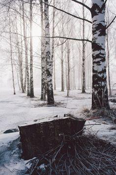 Stump and fog (by VesaM)