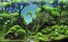 2012 AGA Aquascaping Contest - Entry #382