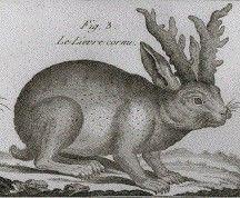 Gravure ancienne d'un lièvre à cornes
