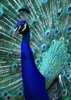 Farbenfarbenfarben <3  Peacock....bathroom colors