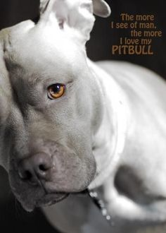 The more I see of man the more I love my pit bull #pitbull