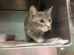 (12) URGENT CATS