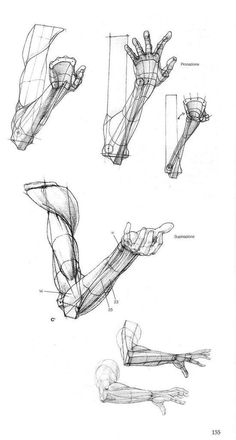 Enjoy a collection of references for Character Design: Arms Anatomy. The collection contains illustrations, sketches, model sheets and tutorials… Arte Com Grey's Anatomy, Arm Anatomy, Anatomy Art, Human Anatomy Drawing, Body Drawing, Life Drawing, Arm Drawing, Drawing Faces, Drawing Techniques