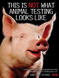 This is not what animal testing looks like