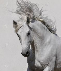 black and white horse - Google Search