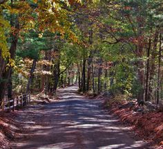 Camp #Yawgoog Road on October 25, 2014.  Posted by Geoff of the Rhode Island Hiking Club.