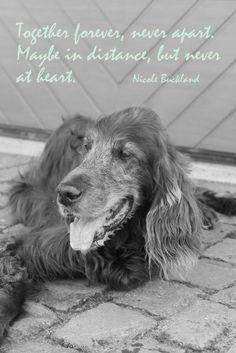 Spruchbild mit York #Trauer #Tod #Sprüche #Hunde