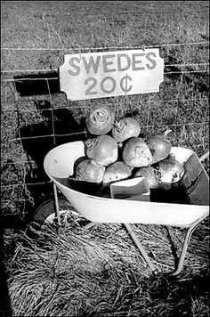 Bruce Connew: Southland NEW ZEALAND, 1995 Farm kids sell swedes for pocket money at a farm gate in Eastern Bush.