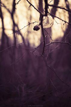 Naturbegegnung